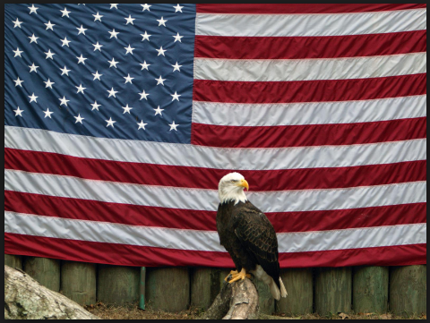Veterans day Bald eagle flag images