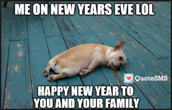 happy new year dog memes