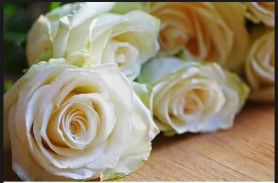 valentines day white flowers